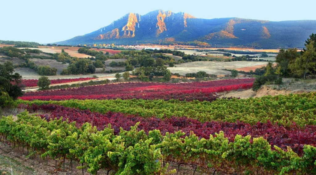 Navarra Wine Run with it