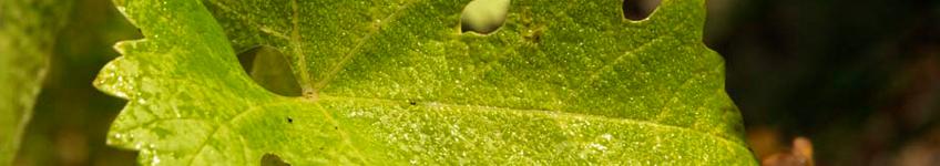 navarra_inbanner_leaf